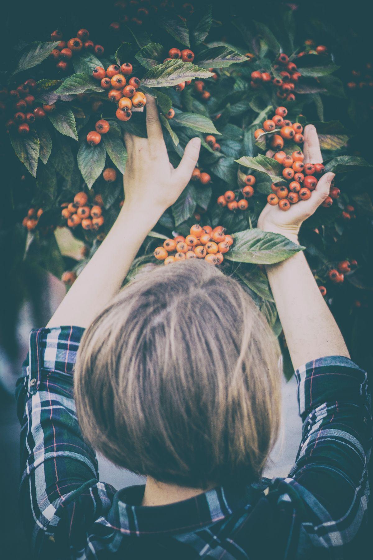 fruit picking at niki