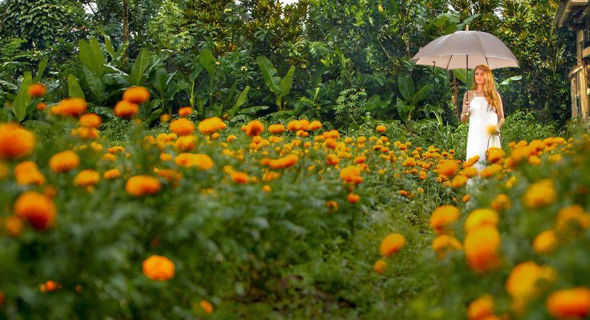 Nandini Jungle Resort & Spa, Bali